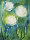 Dandelion Blowballs. Picture of a watercolour painting with dandelion blowballs. The photographer is the creator of this painting and the owner of all right Stock Images