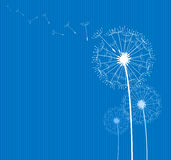 Dandelion on blue. Dandelion in the wind on blue textile background Stock Images