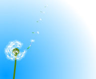 Dandelion on blue background Stock Photos