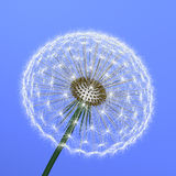 A dandelion on blue background Royalty Free Stock Images