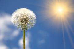 Dandelion on blue sky. White dandelion on blue sky stock photo