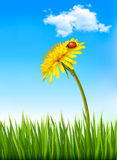 Dandelion on a blue sky and green grass background Stock Photography