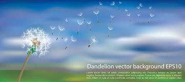 Dandelion blur clouds Stock Photography