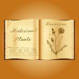 Dandelion. Botanical illustration. Medical plants. Book herbalist. Old open book Stock Photos