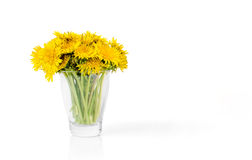 Dandelion Bouqet in Glass Royalty Free Stock Photography
