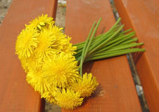 Dandelion. Bouquet of dandelions on a bench Royalty Free Stock Image