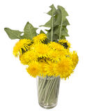 Dandelion. Bouquet of dandelions in a glass with water on a white background Stock Image