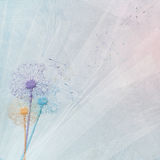 Dandelion bouquet on tulle Stock Images