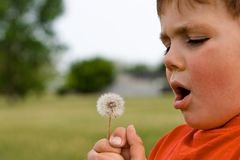 Dandelion boy royalty free stock image