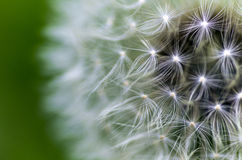Dandelion Breeze Royalty Free Stock Photos