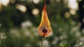 Dandelion burns during a fire. Slow Motion royalty free stock images