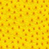 Dandelion carpet Royalty Free Stock Photo