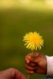 Dandelion child. Child hand holding a dandelion royalty free stock image