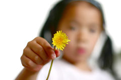 Dandelion child Royalty Free Stock Images