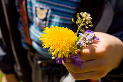 Dandelion in child hands stock photography