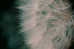 Dandelion, close up view, toy camera effect Royalty Free Stock Images