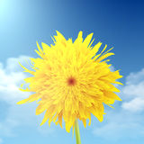 Dandelion closeup with a sky in the background Stock Photos