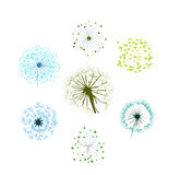 Dandelion Collection. Wind Vector, Silhouette Growth Summer Stock Images
