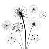 Dandelion Collection. Wind Vector, Silhouette Growth Summer Stock Photo
