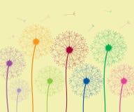 Dandelion colorful royalty free illustration