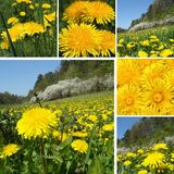 Dandelion composition Royalty Free Stock Image
