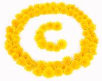 Dandelion Copyright Obrazy Stock