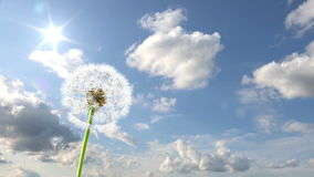 Dandelion. 3d animation against sky background (time-lapse vector illustration