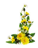 Dandelion and daisy flowers corner arrangement. Isolated on white. Flat lay. Top view stock photo