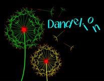 Dandelion dark scene Stock Image