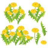 Dandelion design set Royalty Free Stock Image
