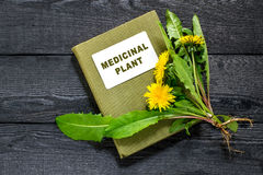 Dandelion and directory medicinal plant Royalty Free Stock Images