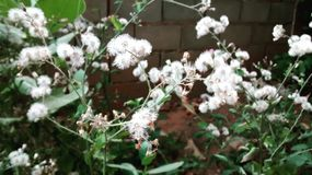 Dandelion drzewo Zdjęcia Stock