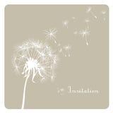 Dandelion on dusty background Stock Image