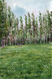 Dandelion field. Watercolor painting. Summer landscape. Dandelion field in the park Stock Images