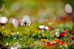 Dandelion on field in autumn Stock Photography