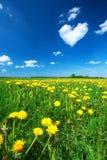Dandelion field with heart shaped cloud Stock Image