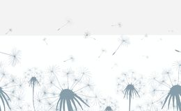 Dandelion field seamless background. Dandelion field seamless horizontal background. Hand drawn dandelions grass flowers with blowing seeds. Vector illustration Stock Photos