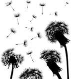 Dandelion field silhouette Royalty Free Stock Photos