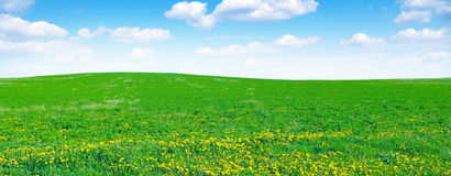 Dandelion field and sky royalty free stock photos