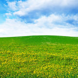 Dandelion field and sky Stock Photography