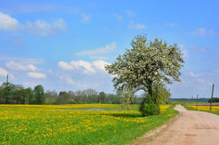 Dandelion field and spring road stock photo