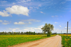 Dandelion field and spring road Stock Photos