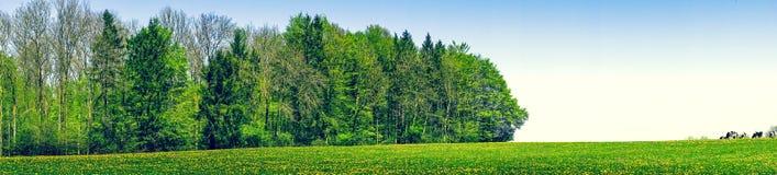 Dandelion field in the summer Stock Image