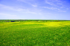 Dandelion fields forever Royalty Free Stock Photos
