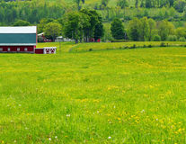 Dandelion Fields and Red Barn Stock Images