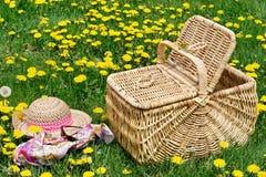 Dandelion filled meadow Stock Image