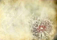 Dandelion flower. Retro style picture Royalty Free Stock Photos