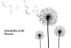 Free Dandelion Flower Stock Photo - 46997410