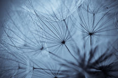 Dandelion flower background. Abstract dandelion flower background, extreme closeup. Big dandelion on natural background. Art photography stock photos
