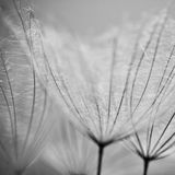 Dandelion flower background Stock Image